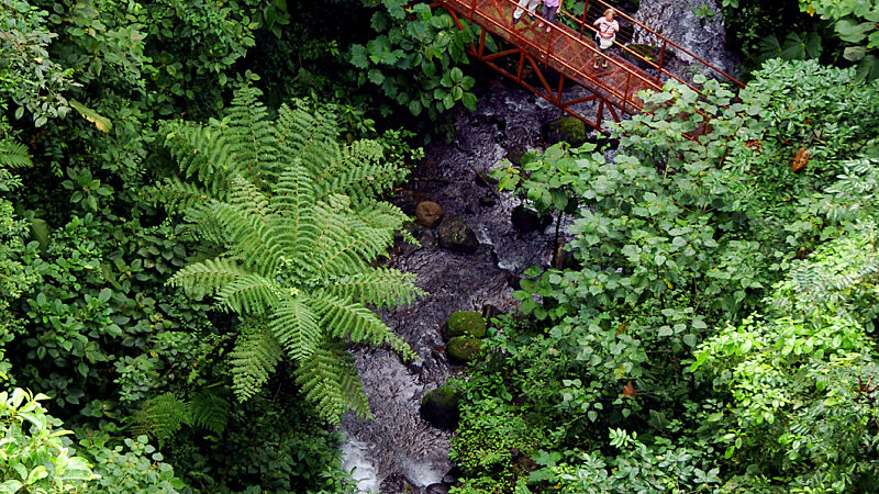 Puentes Colgantes Volcan Arenal