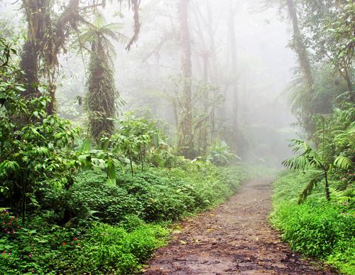 Monteverde Cloudforest Guided Tour