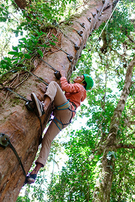 Monteverde tree climbing tour