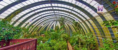 Monteverde butterfly park tour