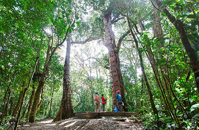 Monteverde tree climbing experience-