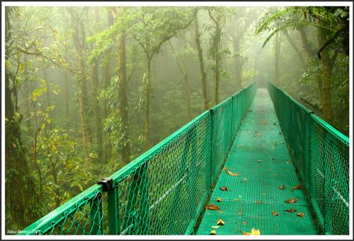 Puentes Colgante en Monteverde