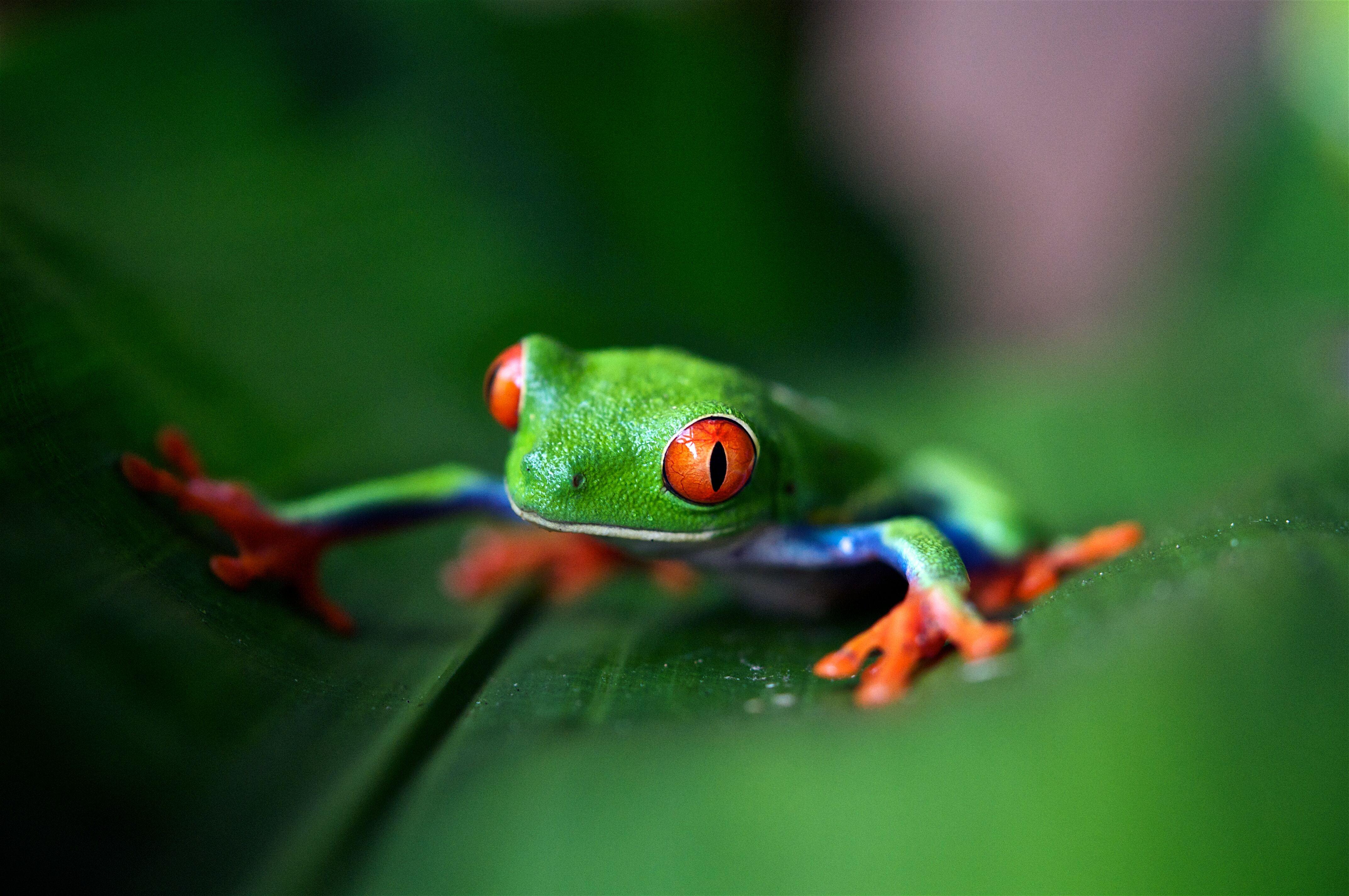 6 razones por las que febrero es la mejor época para visitar Costa Rica