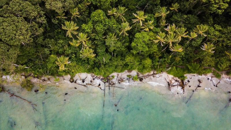 Tour al Manglar de los Cocodrilos y Parque Nacional Carara