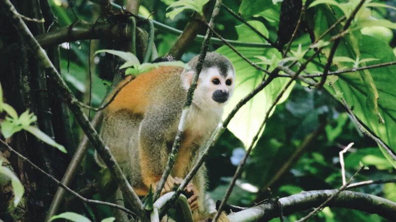 Combo - Parque Nacional Manuel Antonio & Monos en el Manglar