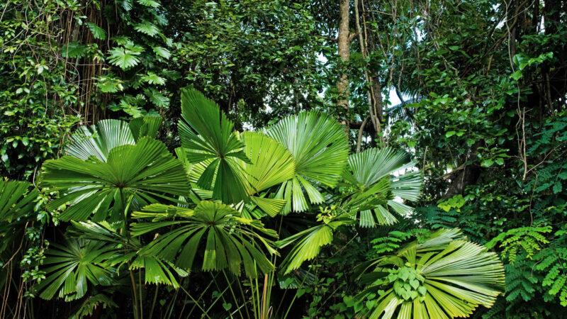 El Tour Del Campo Rainforest Adventure