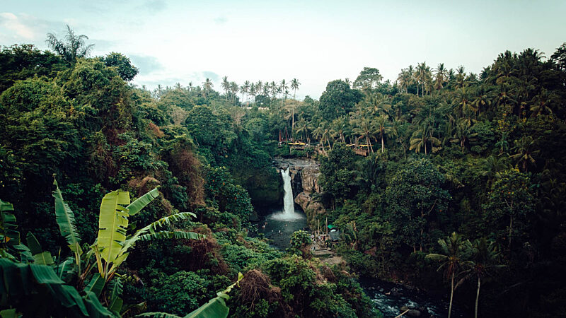 Rainforest Waterfall Tour