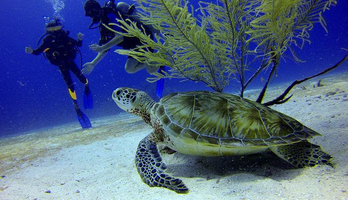 scuba turtle encounter